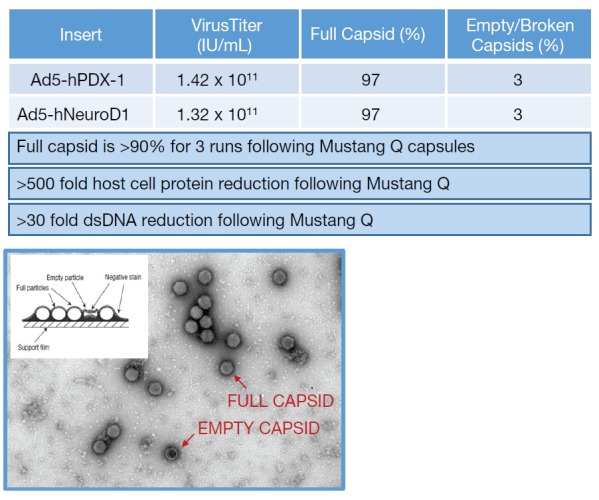Purification of Ad5 by Mustang Q membrane providing impurities clearance